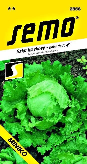 SEMO a.s. Smržice Salát hlávkový MINIKO